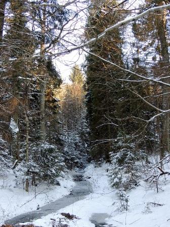 река, проталины, лес, зима
