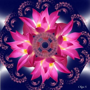 Мандала из розовых цветов