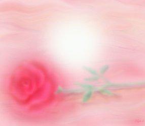 роза - мираж