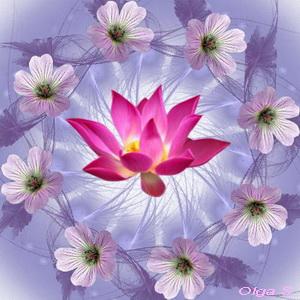 Мандала Розовые Цветы