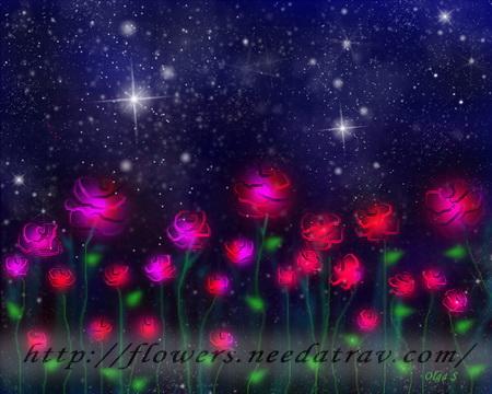 розы и звёзды