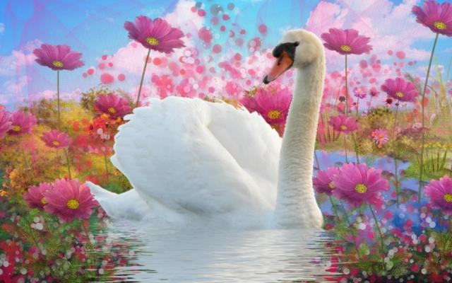 Лебедь в цветочном озере