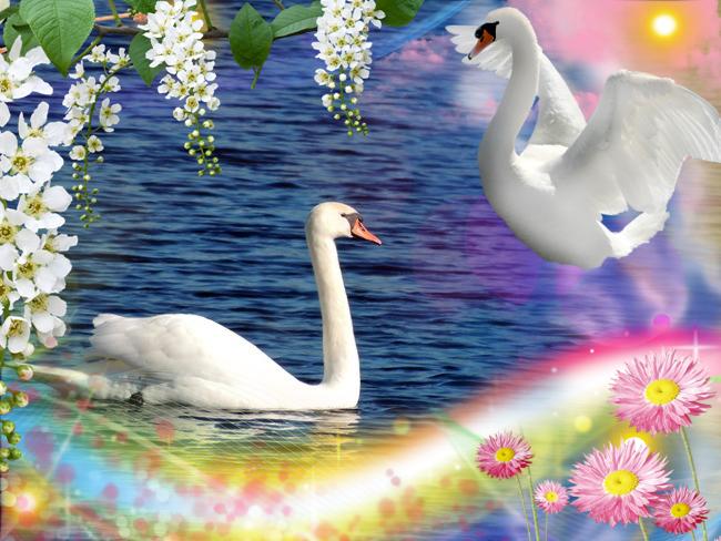 Лебединая сказка